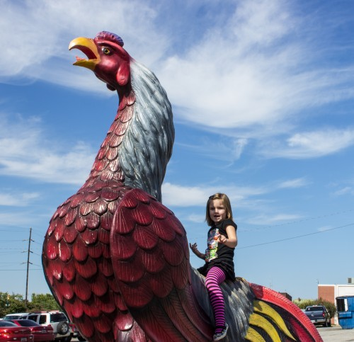 The Unversity of South Carolina mascot: The Game Cock