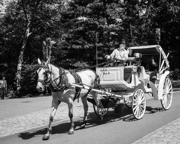 Central Park - Hansom Cab