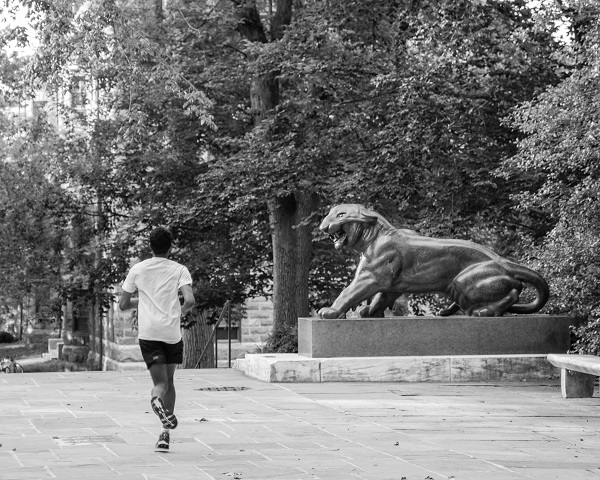 Running with the Tigers