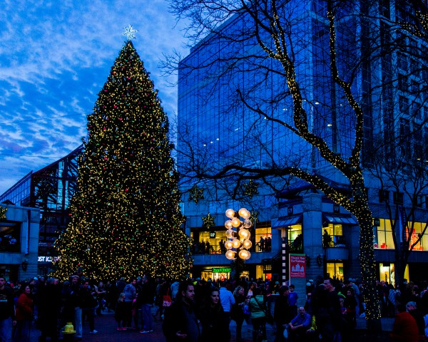 Faneeuil Hall Marketplace Tree