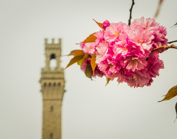 Pilgrim Monument with Flower