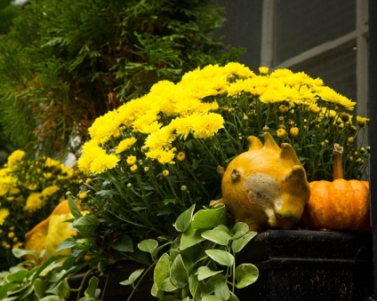 milford-street-flowers-and-gourds