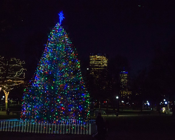 boston-common-christmas-tree